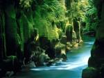 New Zeland (15)