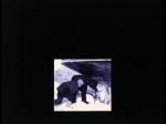 Antartica (019)