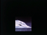 Antartica (029)