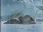 Antartica (037)