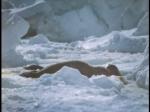 Antartica (040)
