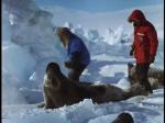 Antartica (043)