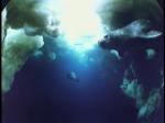 Antartica (050)