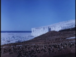 Antartica (055)