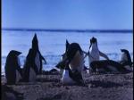 Antartica (056)