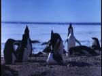 Antartica (057)