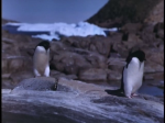 Antartica (059)
