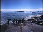 Antartica (060)