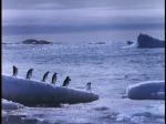 Antartica (061)