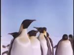Antartica (063)