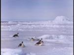 Antartica (067)