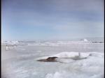 Antartica (070)