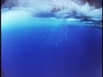 Antartica (072)