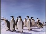 Antartica (075)