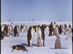 Antartica (076)