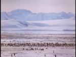 Antartica (077)